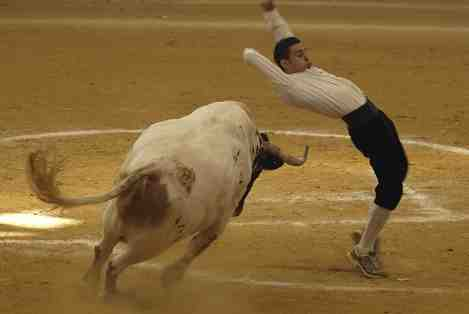 Bullfighter Madrid